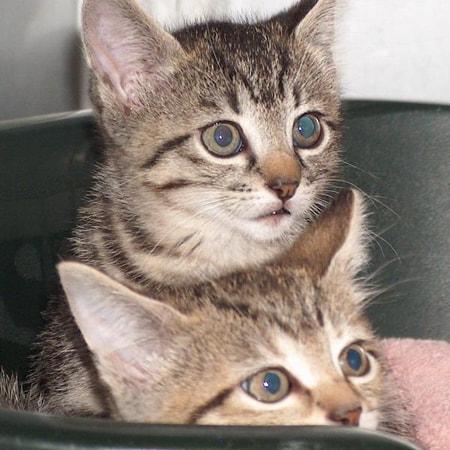 Katze Sari leidet unter Ataxie