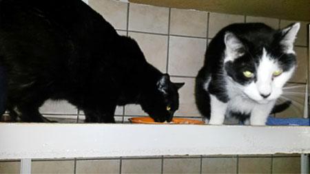 japan katzen tierschutz anfrage