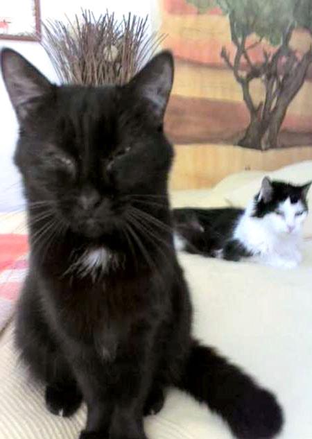 katzenopa behinderten Katze