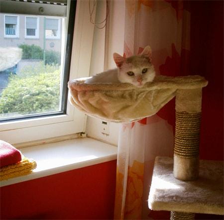 auf dem Katzenbaum