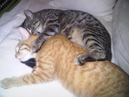 Liam und Noel schlafen