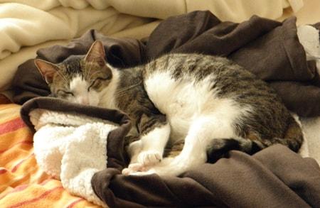 Poldi schläft