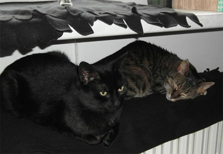 Jackie und Snoozy
