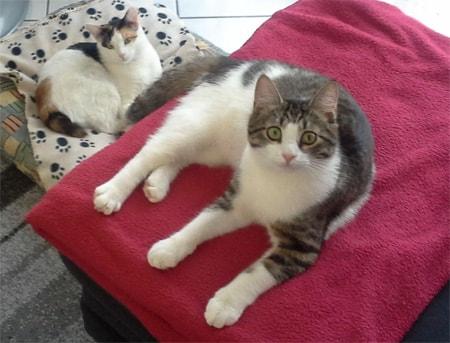 Tischa und Sonya vom Frankfurter katzenschutzverein