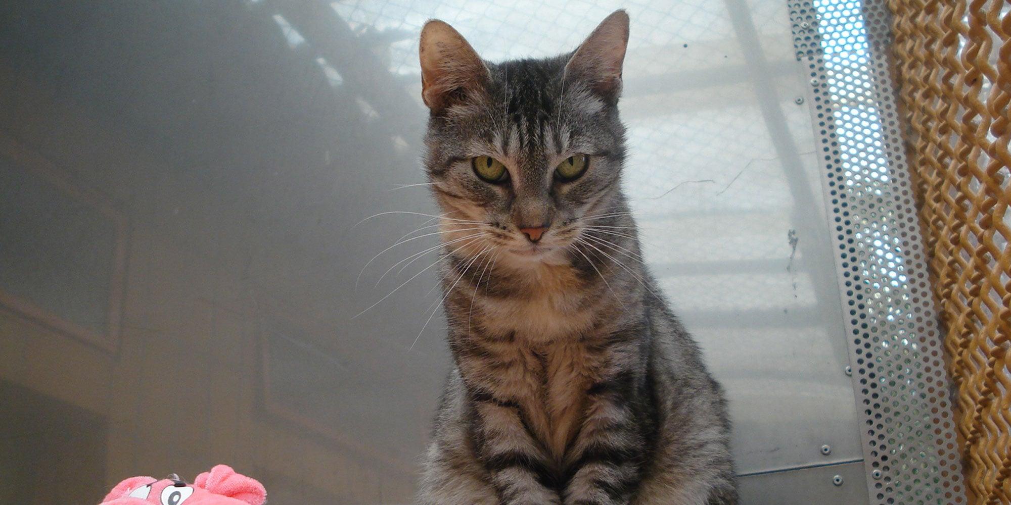 Tierheim frankfurt katzen