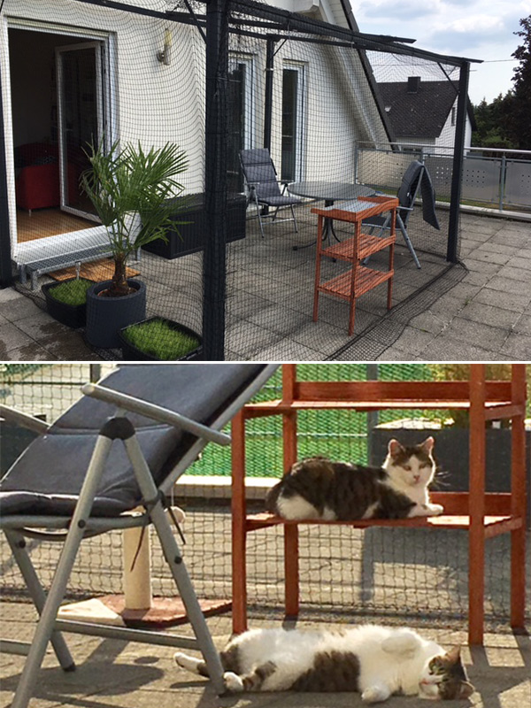 Frankfurter Katzenschutzverein Absicherung Fur Katzen In Wohnung
