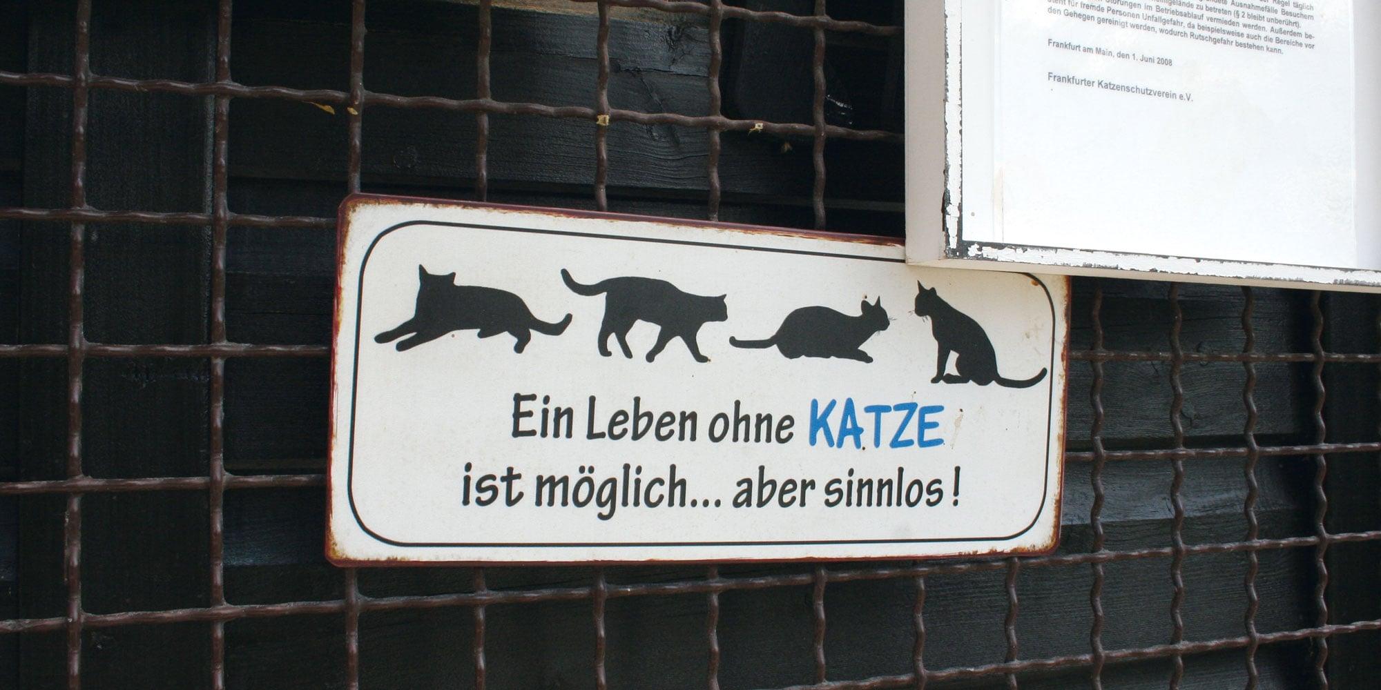 Frankfurter Katzenschutzverein Ein Tag Im Tierheim